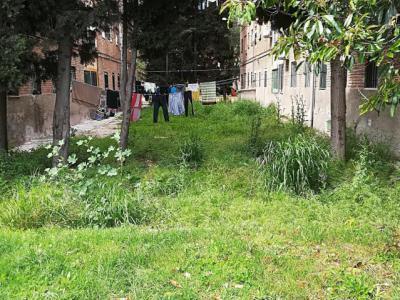 """Las malas hierbas y la vegetación están """"colonizando"""" Talavera"""