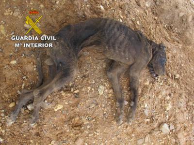 Investigado por dejar morir a su perro de hambre
