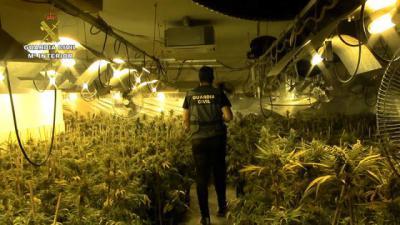 Dos detenidos e incautadas 4.638 plantas de marihuana en un chalet