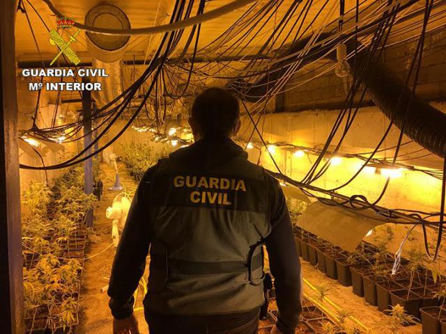 La Guardia Civil de Talavera incauta 2.239 plantas de marihuana en Montearagón