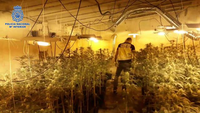 Detienen en Talavera a un hombre de 71 años por cultivar marihuana en una parcela