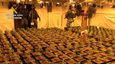SUCESOS | 653 plantas de marihuana, hachís, setas alucinógenas... y dos detenidos (fotos)