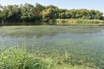 TALAVERA | Tita García solicita de nuevo a la CHT la retirada de algas en el río Tajo