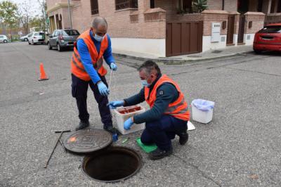 TALAVERA   El Ayuntamiento refuerza el tratamiento contra ratas
