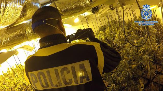 3.600 PLANTAS | El clan familiar dedicado al tráfico de marihuana en pueblos de Toledo (fotos)