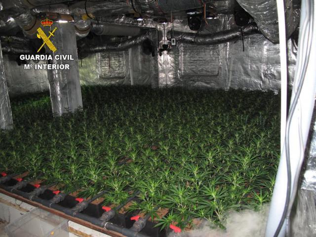 EN UN PUEBLO DE TOLEDO | Sorpresa en un desahucio: ¡929 plantas de marihuana!