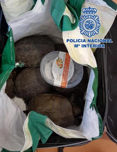 La Policía Nacional sorprende en Talavera a un hombre con 19 tortugas dentro de una maleta