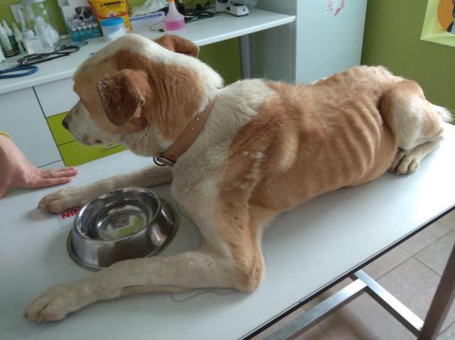 Niegan deficiencias en el Centro de Acogida de Animales de Talavera