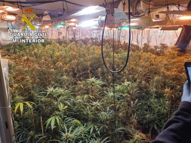 EN UN PUEBLO DE TOLEDO | 3 detenidos y 732 plantas de marihuana incautadas