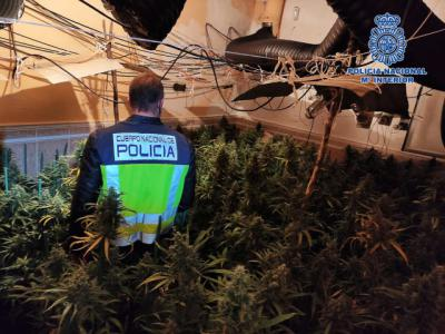 TALAVERA Y COMARCA   Desarticulan dos grupos criminales dedicados al cultivo de marihuana (fotos)