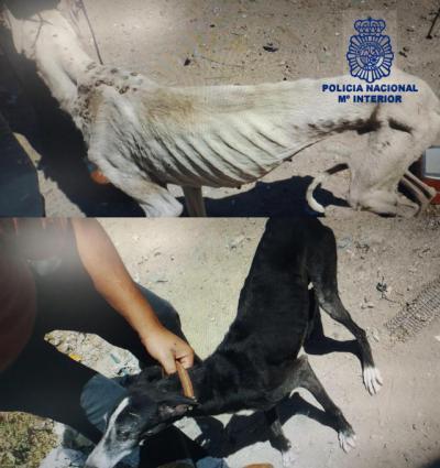 Detenido por abandonar en una vivienda a sus tres perros, sin comida y llenos de parásitos