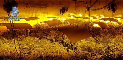 La Policía Nacional de Talavera desmantela un laboratorio clandestino con 490 plantas de cannabis