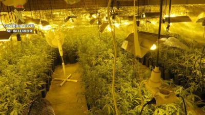 MARIHUANA | Dos detenidos y 700 plantas incautadas en El Casar de Escalona