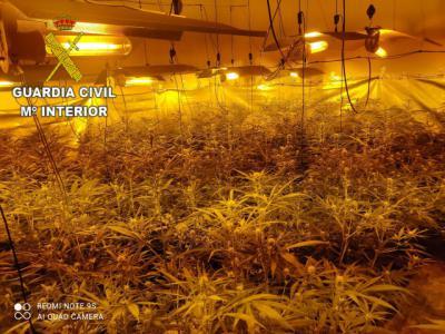TORRECILLA DE LA JARA | Le pillan sin carné y sin seguro... le investigan y... ¡zas! 866 plantas de marihuana