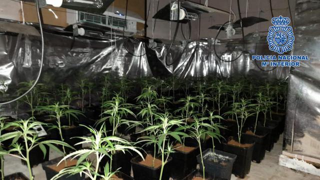 TALAVERA | Detienen a un joven que utilizaba un piso embargado para cultivar marihuana