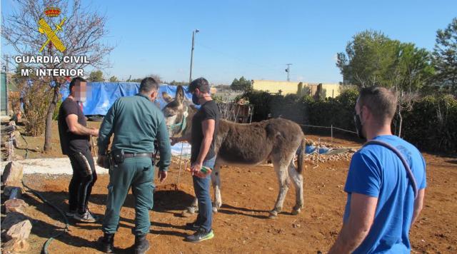 EN UN PUEBLO DE TOLEDO | La Guardia Civil rescata 17 animales en estado de abandono y desnutrición
