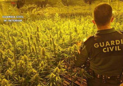 Golpe al cultivo de marihuana en tres pueblos de Toledo