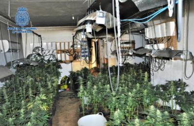 Marihuana en la segunda vivienda: dos detenidos y 424 plantas incautadas