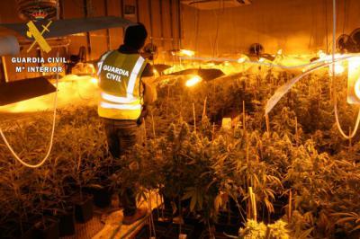 Cuatro detenidos y 1.315 plantas de marihuana incautadas en Los Cerralbos