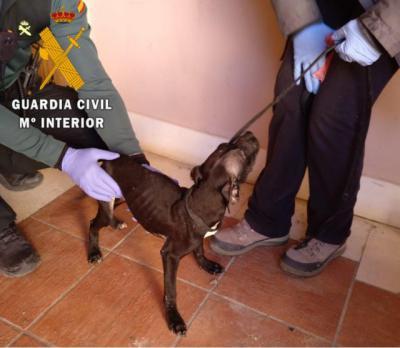 Investigan a un hombre por la muerte de un perro y el abandono de otros tres