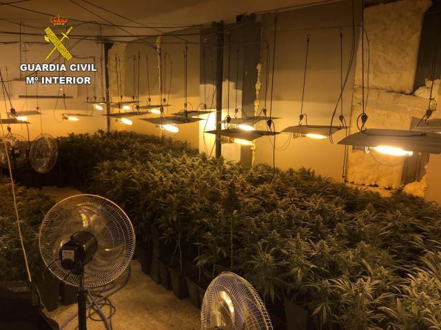 Nuevo golpe contra las plantaciones interiores de marihuana en la región