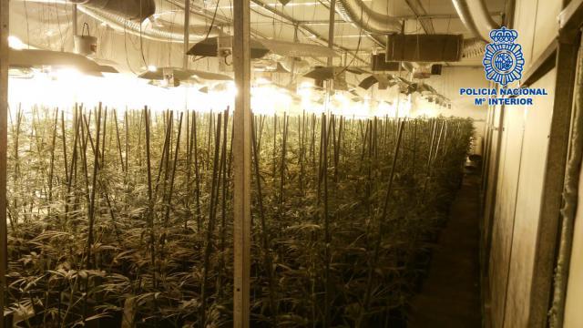 Incautan 1.451 plantas de marihuana y más de 15 kilos de droga en una nave de un polígono industrial