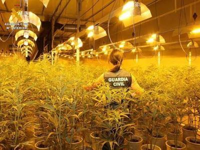 Macrooperación contra la marihuana en Toledo (fotos)
