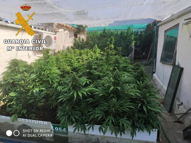 Más marihuana: dos detenidos y 480 plantas incautadas
