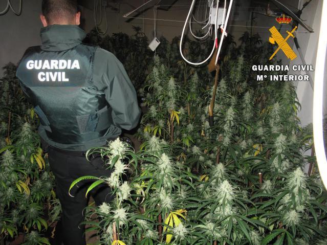 La Guardia Civil prosigue con la caza al cultivo de marihuana