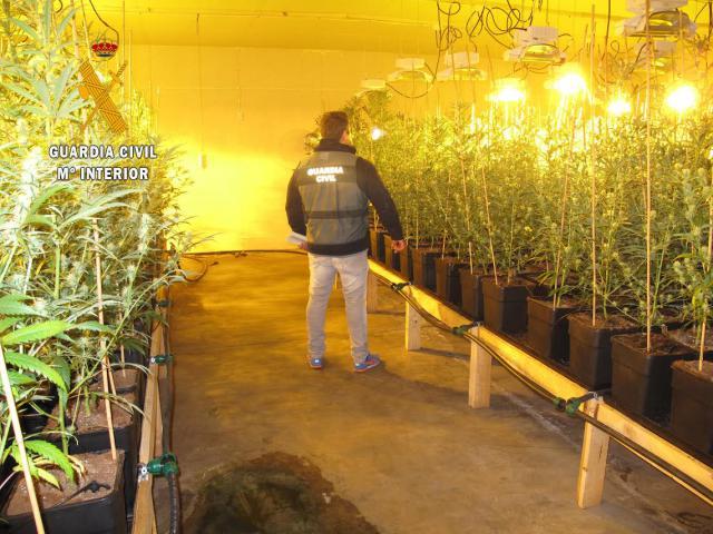 La Guardia Civil incauta 2.685 plantas de marihuana en la provincia de Toledo