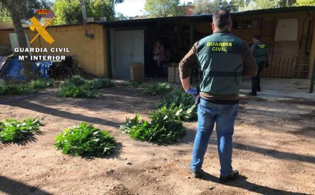 La Guardia Civil detiene a 4 personas e interviene 120 plantas y 6.000 dosis de marihuana