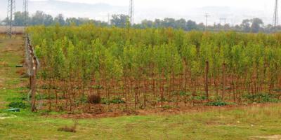 Diputación dona más de 33.000 plantas a Ayuntamientos y entidades locales