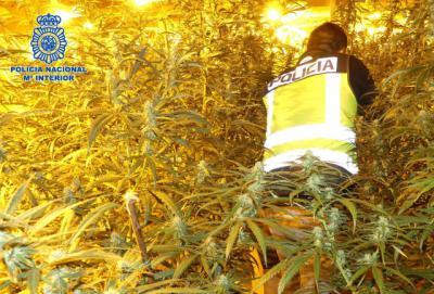 La Policía Nacional incautó 30.390 plantas y 247 kilos de marihuana el pasado año en la provincia de Toledo