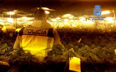 ACTUALIDAD   Lucha contra la marihuana en Talavera