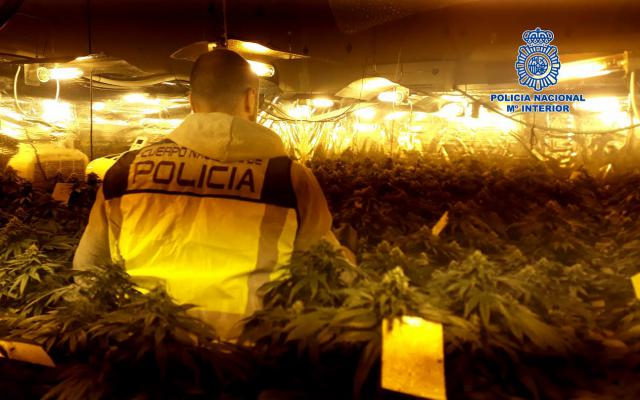 ACTUALIDAD | Lucha contra la marihuana en Talavera