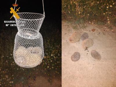 ALCAUDETE DE LA JARA | Se llevaban una especie protegida en Castilla-La Mancha
