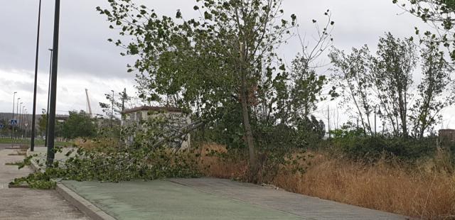 TALAVERA | La borrasca 'Alex' se deja notar: árboles caídos y alerta naranja