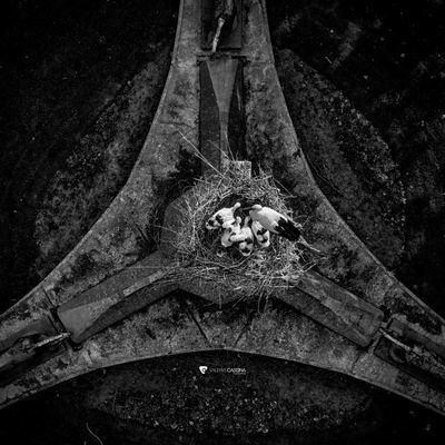 La espectacular imagen de las cigüeñas de Los Leones