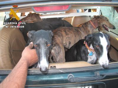 Tres detenidos en una operación por caza furtiva y robo de galgos