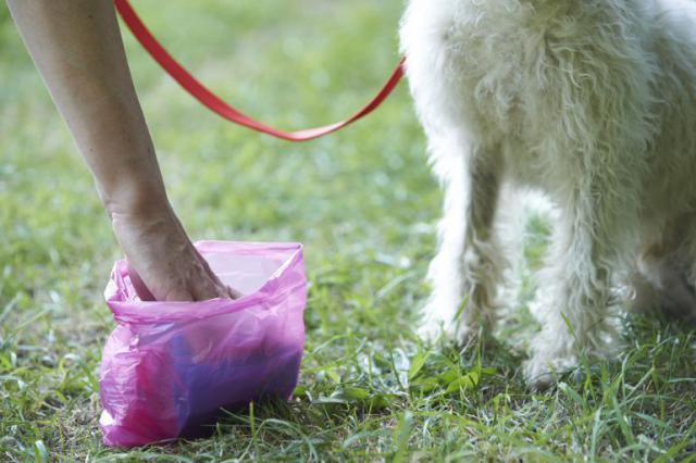'Haz que tu perro se sienta orgulloso de ti', la nueva campaña para tener una Talavera más limpia