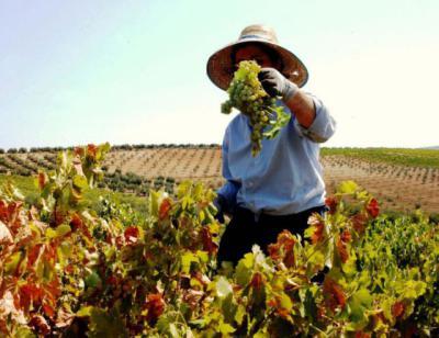 Unión de Uniones denuncia que las pensiones del medio rural son un 41,2% más bajas