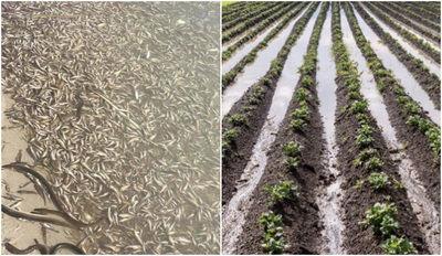 El desastre del Mar Menor se podía haber evitado: cultivos ilegales, consumo de agua sin control...