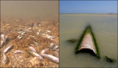¿Quién mató al Mar Menor? Greenpeace lo tiene claro