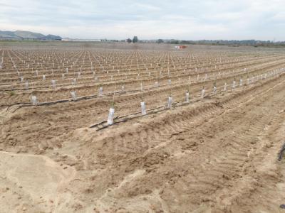 OPINIÓN   ¿Y si la solución de la vega talaverana pasara por las plantaciones frutales?