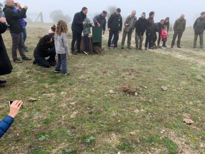 El lince 'Quejigo', liberado hoy en una finca de Villarejo de Montalbán, es el tercer ejemplar de los cinco que este año se reintroducen en Los Montes de Toledo