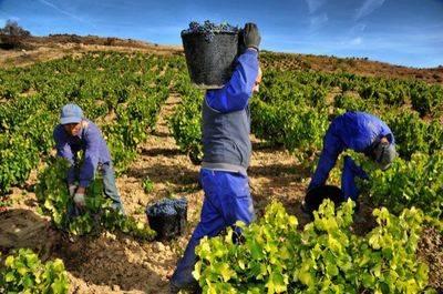 ASAJA revisa las estimaciones de producción de vino y mosto en Castilla-La Mancha