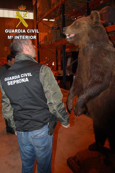 La Guardia Civil interviene colmillos, patas de elefante, hipopótamos, osos y lobos