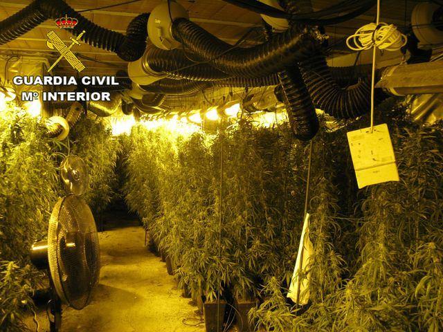 ACTUALIDAD | Detenidos padre e hijo por cultivar marihuana