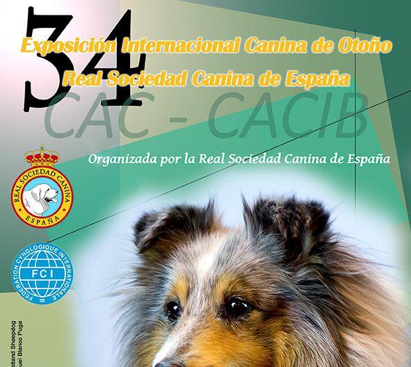 La Exposición Internacional Canina reunirá a más de 4.000 perros en Talavera