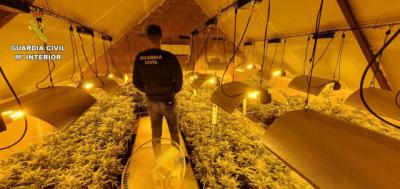 ALBARREAL DE TAJO   Dos detenidos y 385 plantas de marihuana incautadas
